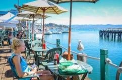 Seemöwe, die nach einer Mahlzeit sucht - Morro-Bucht-Hafen - Kalifornien Stockfotos