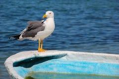 Seemöwe, die vollen Körper auf Rand des Türkis-Fischerbootes steht Stockfotos