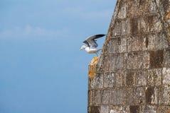 Seemöwe, die von einem Kirchturm sich entfernt Lizenzfreies Stockbild