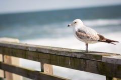 Seemöwe durch den Ozean lizenzfreie stockbilder