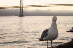 Seemöwe durch die Brücke Lizenzfreie Stockfotos