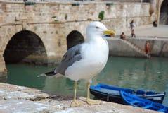 Seemöwe in einem Hafen mit Hintergrundblaubooten Stockfotos