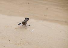 Seemöwe entfernen sich lizenzfreie stockfotos