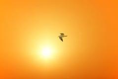 Seemöwe fliegt über den Kanal stockfotografie