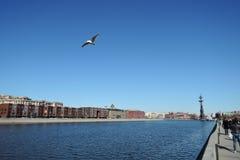 Seemöwe fliegt über den Moskau-Fluss Monument zu Peter der Große Stockbild