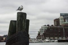 Seemöwe gehockt auf Liegeplatz in Boston-Hafen Lizenzfreies Stockbild