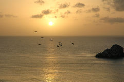 Seemöwe im Flug auf Horizontmeer Stockfotos