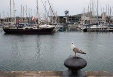 Seemöwe im Hafen Stockbild