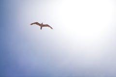Seemöwe im Himmel Lizenzfreies Stockfoto