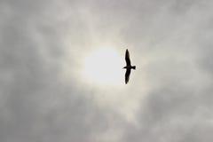 Seemöwe im Himmel Lizenzfreies Stockbild