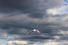 Seemöwe im Himmel Stockfotografie
