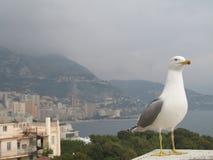 Seemöwe im Monaco Stockfotografie