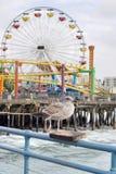 Seemöwe im Pier Lizenzfreies Stockfoto