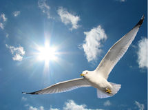 Seemöwe im Sonnenschein Lizenzfreie Stockfotos