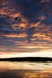 Seemöwe im Sonnenuntergang Stockbilder
