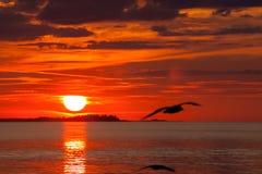 Seemöwe im Sonnenuntergang in Finnland Stockfotos