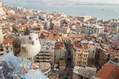 Seemöwe mit Ansicht von Istanbul die Türkei Lizenzfreie Stockbilder