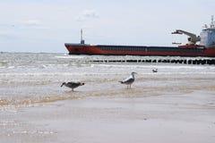 Seemöwe mit Schiff Stockfotografie
