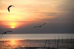 Seemöwe mit Sonnenuntergang im Hintergrund Stockbilder