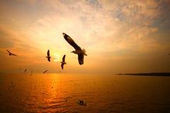 Seemöwe mit Sonnenuntergang in Thailand Lizenzfreie Stockfotos