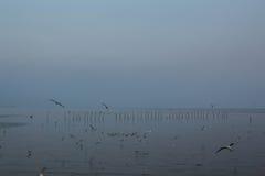 Seemöwe mit Wasser während stockfotografie