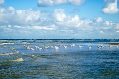 Seemöwe mit Wellen stockfoto