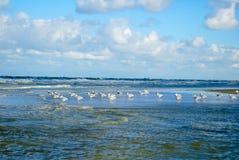 Seemöwe mit Wellen stockbild