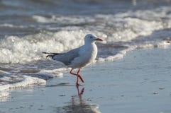 Seemöwe nah oben auf Strand-Küstenlinie Lizenzfreies Stockbild