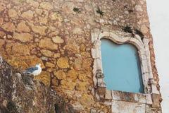 Seemöwe nahe antikem historischem Monumentfenster, Lagos, Portugal lizenzfreie stockfotos