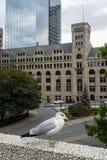 Seemöwe observs Straßen von Montreal Lizenzfreies Stockbild