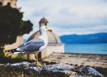 Seemöwe in Portovenere, Italien stockfoto