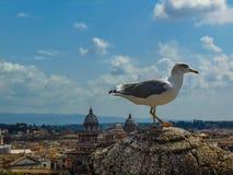 Seemöwe in Rom stockfotos