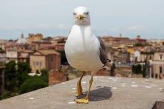 Seemöwe in Rom stockfotografie