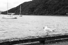 Seemöwe am Seehafen Lizenzfreie Stockfotos