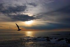 Seemöwe am Sonnenuntergang Stockfotografie