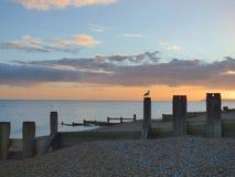 Seemöwe steht gegen das Meer und den Sonnenuntergang Stockbild