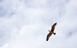 Seemöwe u. x28; Gull& x29; , Adriatisches Meer Lizenzfreies Stockfoto
