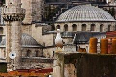 Seemöwe und blaue Moschee, Istanbul Stockbild