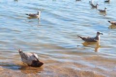 Seemöwe und Fische Stockbild