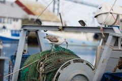 Seemöwe und Fischerboot Stockfoto