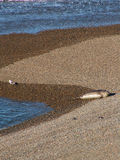 Seemöwe und Meer Lion On Beach Stockfoto