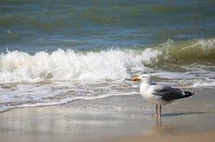 Seemöwe und Wellen lizenzfreie stockbilder