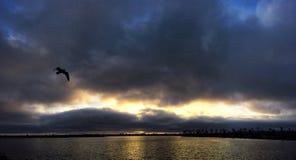 Seemöwe unter den regnerischen Wolken Lizenzfreie Stockfotografie
