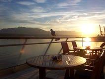 Seemöwe in Vancouver Lizenzfreies Stockbild