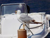 Seemöwe vor dem Boot Stockfotografie