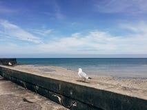 Seemöwe vor dem Ozean Lizenzfreies Stockbild