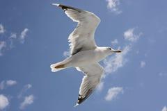 Seemöweflugwesen stockfotografie