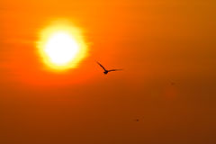 Seemöweflugwesen lizenzfreie stockbilder