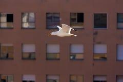 Seemöweflugwesen vor Fenstern Stockbild