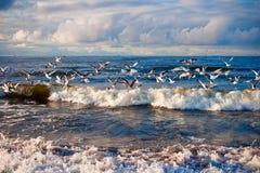 Seemöwen über dem Meer Stockfotos